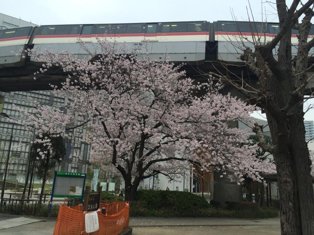 写真 2015-04-01 10 19 41